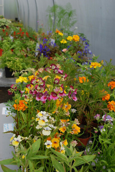 Colour in the Polytunnel