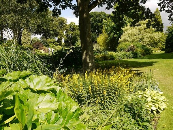 Beth Chatto Gardens, July