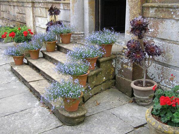 Tintinhull House Garden, Somerset