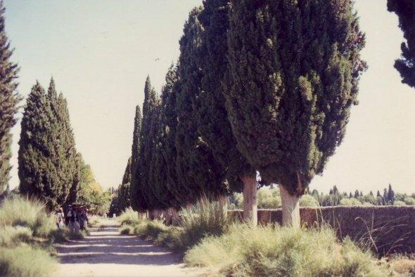 Mimla Gardens