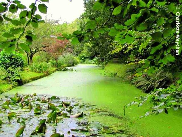Docton Mill Garden