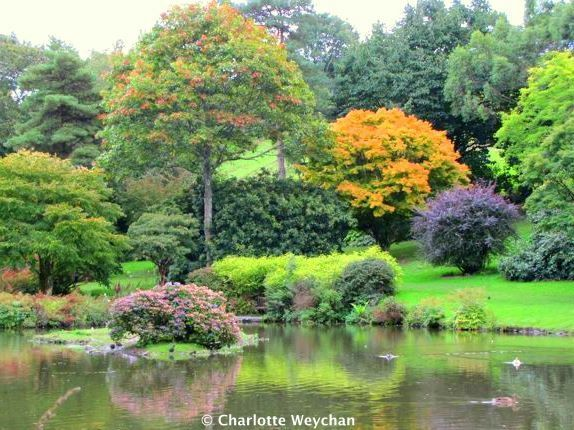 Marwood Hill Garden, 2010