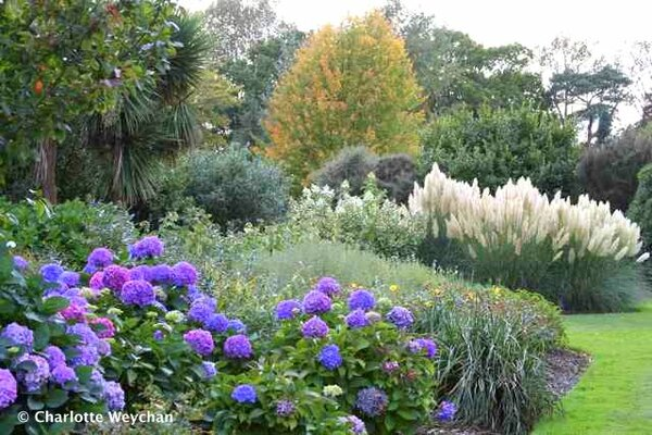 Hydrangeas, Wakehurst Place