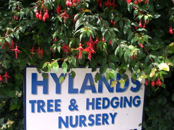 Hylands Tree & Hedging Nursery