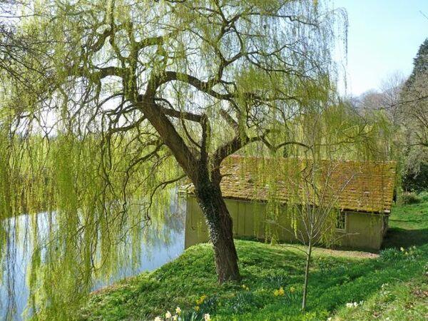 The Weir Garden, March